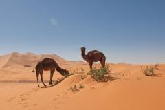 maroko108
